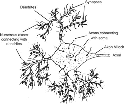 The role of dendrites in PTSD Flashbacks